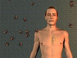 Cockroach Dream