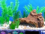 Fish Tycoon