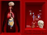 Anatomical Box