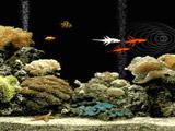 Оналйн аквариум