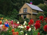 Escape from Beautiful Garden