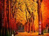 Amreli Forest Escape