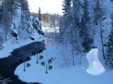 Alaskan Winter Forest Escape
