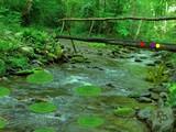 Forest Falls Wilderness Escape