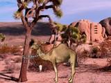 Arabian Desert Escape