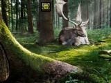 Reptiles Forest Escape