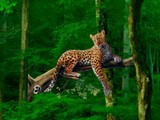 Wild Animals Forest Escape
