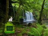 Rain Forest Rabbit Escape