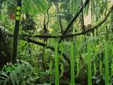 Vein Forest Escape
