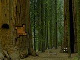 Amazing Redwood Forest Escape