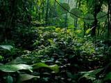 Deep Rainforest Escape
