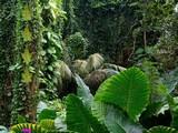 Amazon Rainforest Escape