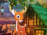 Cute Deer Rescue