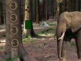 Escape from Wild Elephant