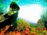 Aqua Forest Escape