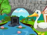 Cute Swan Rescue