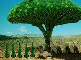 Dragon Tree Forest Escape