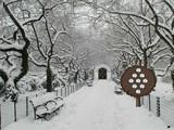 Central Snow Park Escape