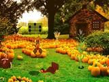 Happy November Escape