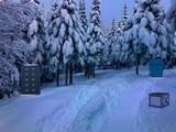 Snow River Forest Escape