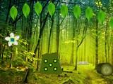 Amusing Forest Escape