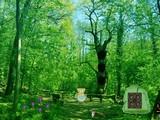Escape from Coniferous Landscape