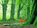 Deer Range Forest Escape