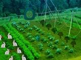 Vegetable Forest Garden Escape