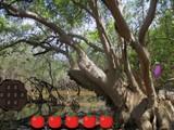 Mangrove Forest Escape