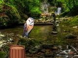 Masked Owl Island Escape