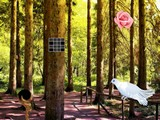White Pigeon Forest Escape