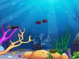 Deep Sea Fishes Rescue