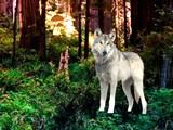 Wild Fox Forest Escape