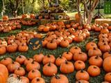 Save the Pumpkin Man