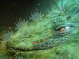 Caterpillar Life Cycle Escape