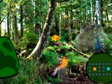 Peacock Dance Forest Escape