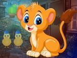 Find Lion Cub