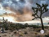 Oasis Desert Escape