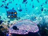 Underwater Lionfish Escape