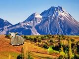 Mountain Sheep Escape