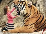 Tiger Hidden Numbers