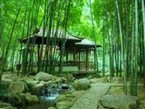 Grove Bamboo Forest Escape