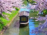 Japanese Blossom Garden Escape