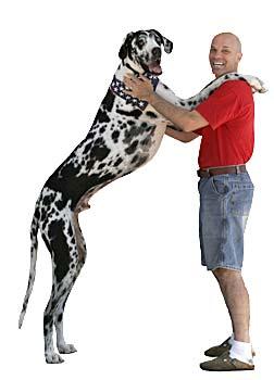 Самая длинная собака