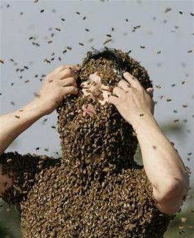 260.000 пчел