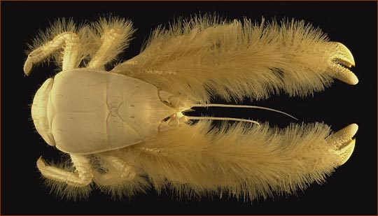 Красивая мохнатая игрушка Yeti Crab