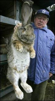 Кролик-монстр