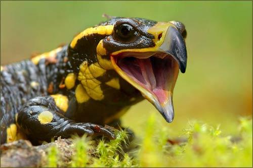 Забавные и интересные фото животных