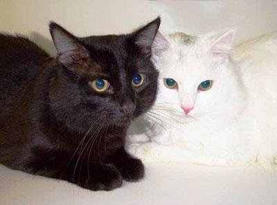 Коты, не вызывающие аллергию