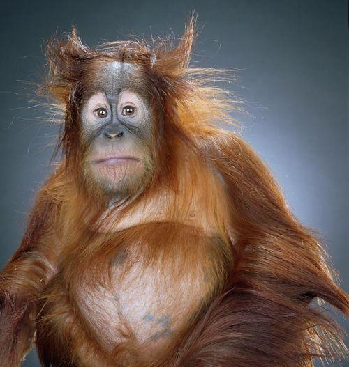 Классные фотографии обезьян